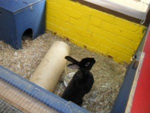 5151 childs picture of a rabbit from the farm