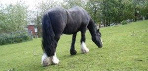 5155 childs picture of a horse on the farm