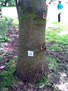 5122 QR code on tree