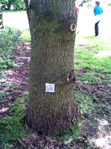5122 QR code on tree